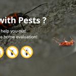 cockroach-exterminators profile image.