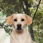 Puppy Pics Chicago profile image.