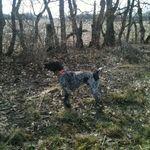 Rude Beaver Gun Dogs, LLC profile image.