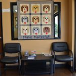 Pooch Playhouse & Boarding LLC profile image.