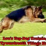 Lou's Top Dog Training profile image.