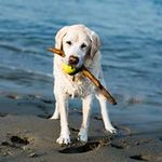soggy dog designs profile image.