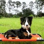 Off Leash K9 Training SW Florida profile image.