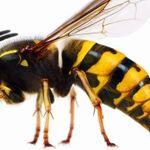 bath wasp control profile image.