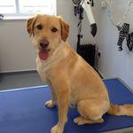 The Dog Box - Dog Grooming & Dog Walking Exeter profile image.