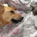 Katherine Brown - Dog Behaviourist profile image.