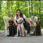 Pams Paws Dog Training profile image.