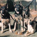 Stryken Dog Training profile image.