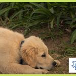 Smart Puppy School profile image.