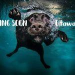 AquaFit Dog Care profile image.