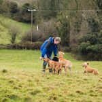 Brookvale Boarding Kennels & cattery profile image.