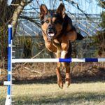 Hamilton Dog Training profile image.