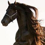 Nadia du Toit Photography profile image.