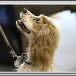 Top Dog Canine Training profile image.