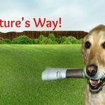 Alpha Paws Dog Training profile image.