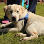 Wonder Paws Puppy School profile image.