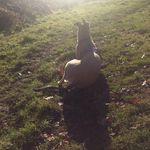 Steph's Dog Training profile image.