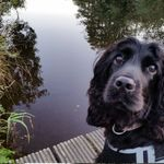 The Dog Treanor profile image.