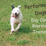Performance Dogs profile image.