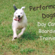 Performance Dogs logo