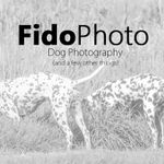 FidoPhoto - Dog Photography profile image.