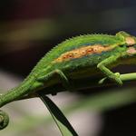 On - Safari Wildlife Photography profile image.