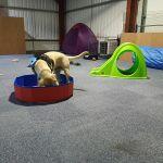 Bark2School Ltd profile image.