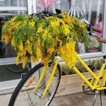 Mimosa Floral Boutique profile image.