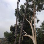 Edgar's gardening and tree service  profile image.