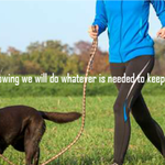 Teach My Dog profile image.