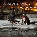 Turner & Pooch Dog Training profile image.