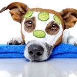 True Pet Spa Dog Grooming  And Dog Training profile image.