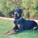 Best By Farr Dog Training profile image.