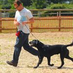 Familydogservices profile image.