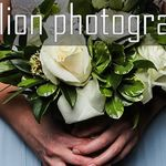 One Lion Photography profile image.