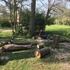 Colledge Tree & Landscape
