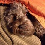 AdoringDressesAU profile image.