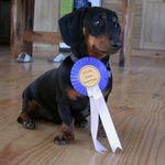 Good Dog Training Center & Doggie Resort, LLC profile image.
