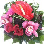 Plush Floral Studio profile image.