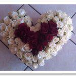 Floral DLight profile image.