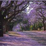 Pretoria Institute for Architecture profile image.