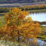 Cranston Photography - Calgary profile image.