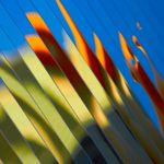 Zach Lipp Photography profile image.