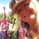 Sunfresh Flowers profile image.