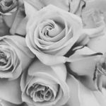 Eclipse Weddings and Floral Design profile image.