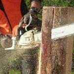 Tree Fellin Joburg profile image.
