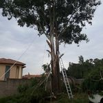 BUSHVELD TREE FELLERS (PTY) LTD profile image.