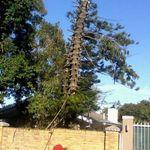 mck tree fellers profile image.
