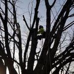Shadywood Tree Experts & Landscaping profile image.