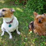 Lucy & Brandy - Éducatrice canine / Dog trainer profile image.